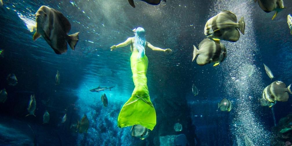 """80后女孩做""""美人鱼""""六年潜水超1800小时"""