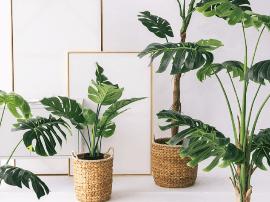 给你的家添上一点绿 十种ins北欧风绿植推荐!