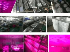 山东农之光:生态农业光学研发、生产、销售为一体的科技企业