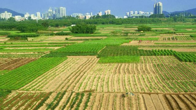 农村承包地确权进入收尾阶段 确权面积已达11.59亿亩