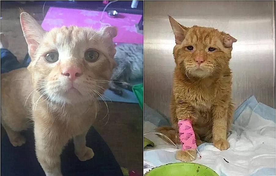 生无可恋的小猫,被人领养才1小时,彻底的变了!