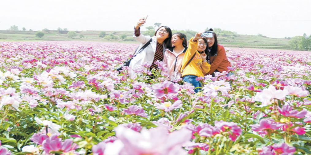 沁县:游客在绚丽多彩的花海中拍照