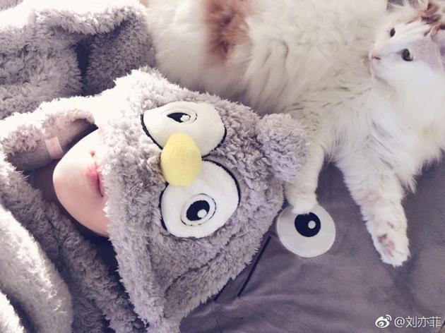 刘亦菲穿睡衣与猫咪自拍 粉丝大赞:你最萌