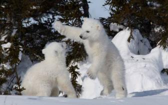 持续优惠!为你精选加拿大10大国家公园特色之旅!