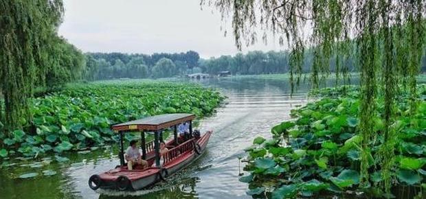 北京:赏荷圆明园