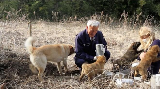 """日本福岛核泄漏的""""动物守护神"""""""
