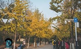 《青岛印象》40期:有一种秋天叫八大关