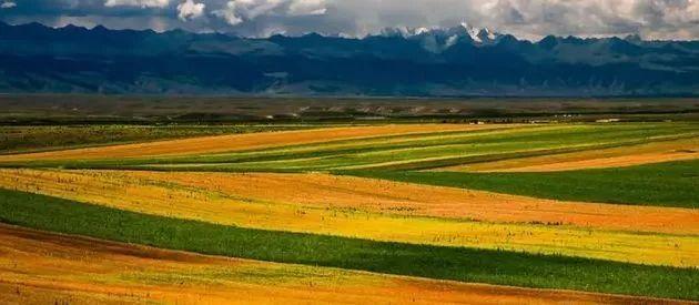 新疆唯一一个没有荒漠的小县城 只有花海和美景