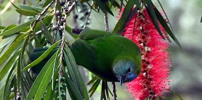 海南尖峰岭自然保护区:热带雨林 百鸟家园