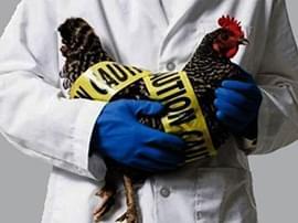 武汉确诊10例H7N9禽流感病例 关闭445家活禽市场