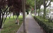500米长盲道竖9根电线杆 阻碍通行存隐患