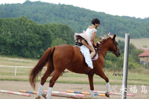 每日易乐:小姐姐骑马姿势很专业 一看就是老骑士