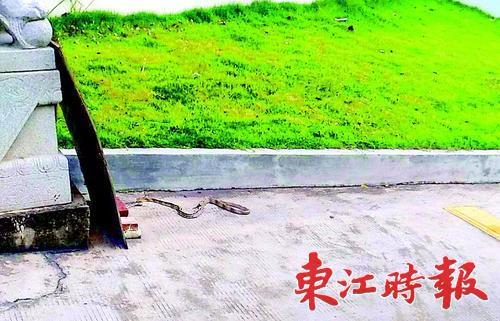急诊|@惠州人 外出游玩远离草丛,当心蛇出没