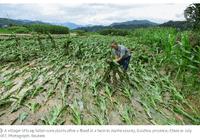 若中美玉米同时绝收 非洲和南亚兄弟们最遭殃?