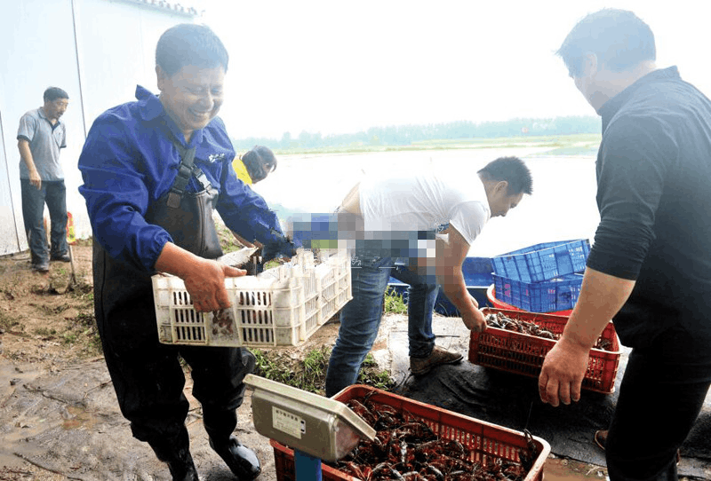 嘉鱼县新街镇王家月村小龙虾供不应求