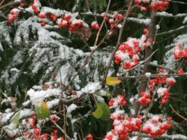 英山迎来了入冬以来首场大雪气温降至3℃