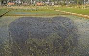 巨幅3D稻田画亮相沈阳