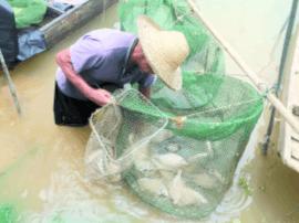 珠江流域史上最长禁渔期结束 佛山人河鲜更抵食!