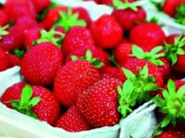科学研究多吃草莓可减缓智力衰退
