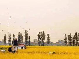 广东藏在江门的一座仙居小镇,养在深闺少有人知!