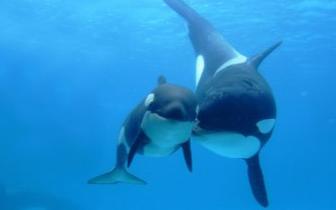 北海人周末没有事做? 可以去看看鲸鱼!