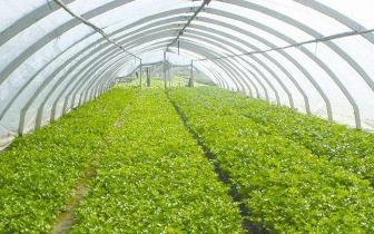 通山不断壮大绿色农业 建成一批特色示范基地