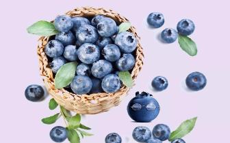 石笋山万斤富硒蓝莓成熟啦 5月20日正式开园!