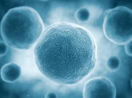 免疫细胞新发现有助于开发慢性肺炎疗法