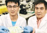 香港大学研制出防水防油物料 不用再为洗衣服发