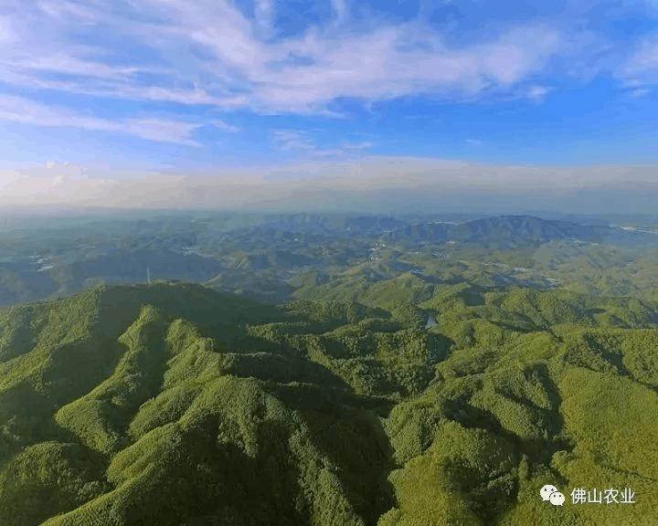 佛山有一座桃花源,还被评为2017中国最美林场!