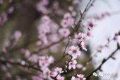 3月来韶关这个最美乡镇!邂逅你的桃花运!
