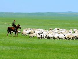 【撸起袖子加油干】畜牧业,瞄着市场向前跑