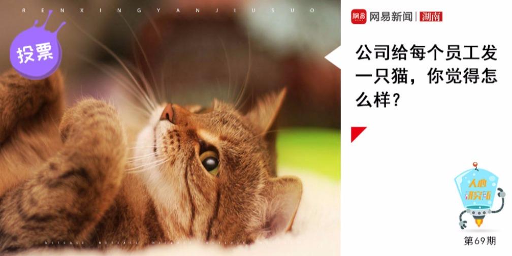 给每个员工发一只猫,离职要退还给公司,你觉得怎么样
