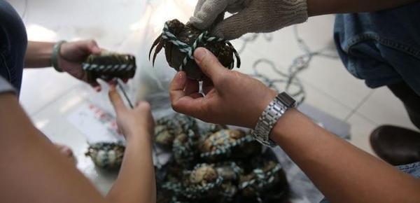 西安市民买螃蟹 5.1斤螃蟹4.4两是冰和绳子