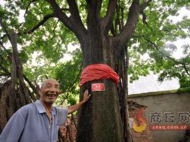 宁陵县张弓镇管庄村小村现千年古树已实施严格保护