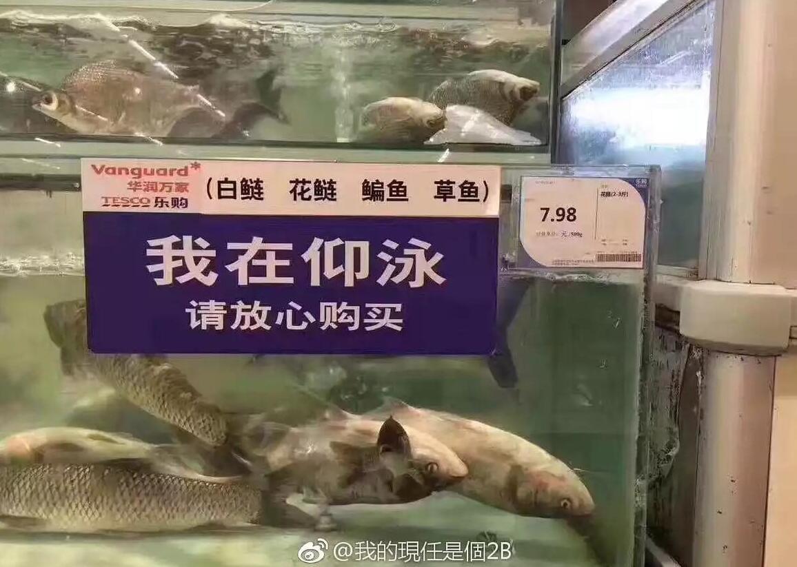 我在仰泳请放心购买