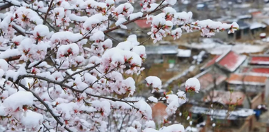 北京30年来首次四月雪!雪景都在这儿