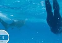 菲尔普斯PK大白鲨:看到的只是假鲨鱼