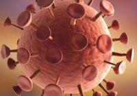 中国科研人员用冷冻电镜重构复杂疱疹病毒
