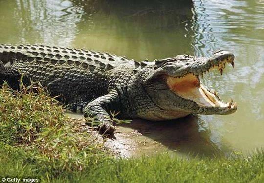 澳15岁男孩离家出走被找到时只剩残肢 凶手是鳄鱼