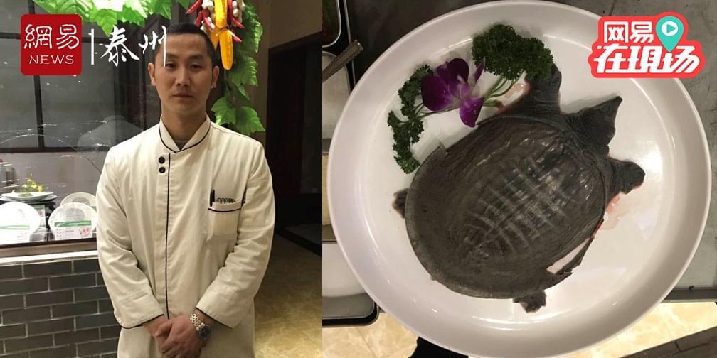 《我的拿手菜》探秘浓汤甲鱼的神秘配方