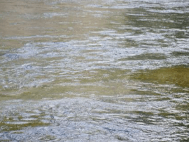 珠海检查组巡河调研 确保珠澳水环境良好