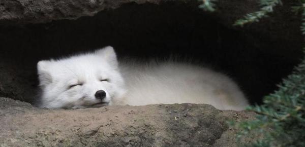 动物睡觉时真可爱 有的好像还在微笑