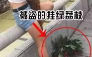 增城女子因失恋偷荔枝吃 1粒曾叫价55万
