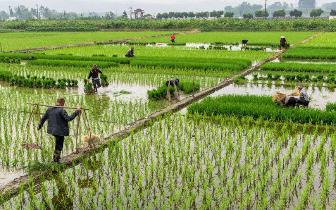 两部委:撬动更多金融和社会资本投向农业农村