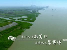 百集系列微视频《发现泰州之美》:龙凤呈祥