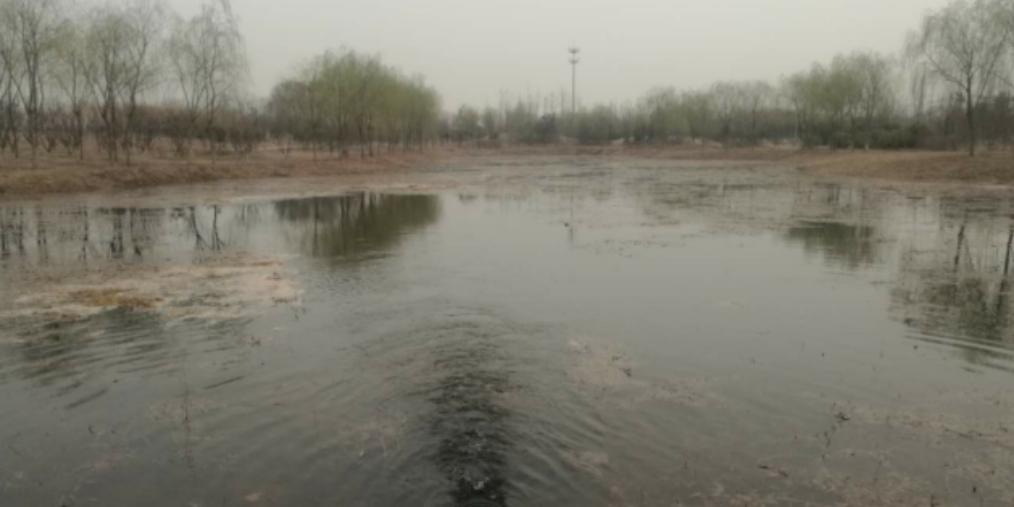 丛台路森林公园人工湖成功注水