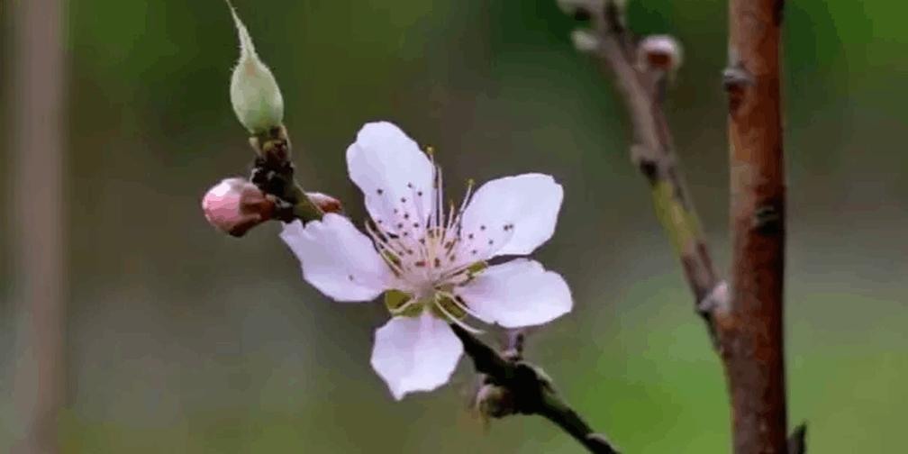 这周末你有空吗,想约你去揭阳看桃花