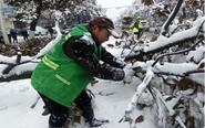 湖北暴雪致多地树木被压垮 市民出行困难