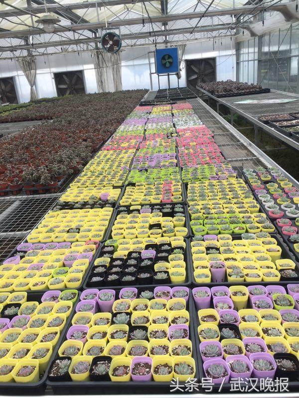 """2678个""""晒阳台""""家庭每户获赠花卉2盆 16日起快递陆续送花上门"""